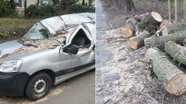 Wiatr łamał drzewa. Zerwane trakcje tramwajowe, zniszczone samochody