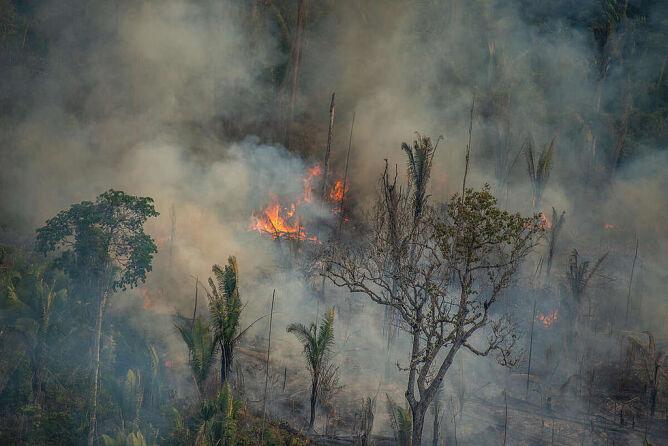 Pożar w Jaci-Paraná w Porto Velho, w stanie Rondônia w Brazylii w połowie sierpnia 2020 roku (Christian Braga/Greenpeace)