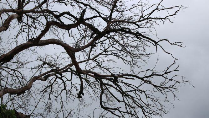 Pogoda na dziś: pochmurno, do 5 stopni