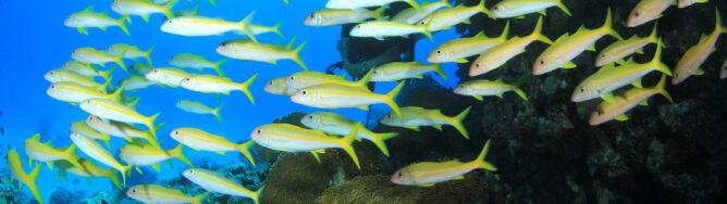 Ryby zmaleją o jedną czwartą jeszcze za naszego życia